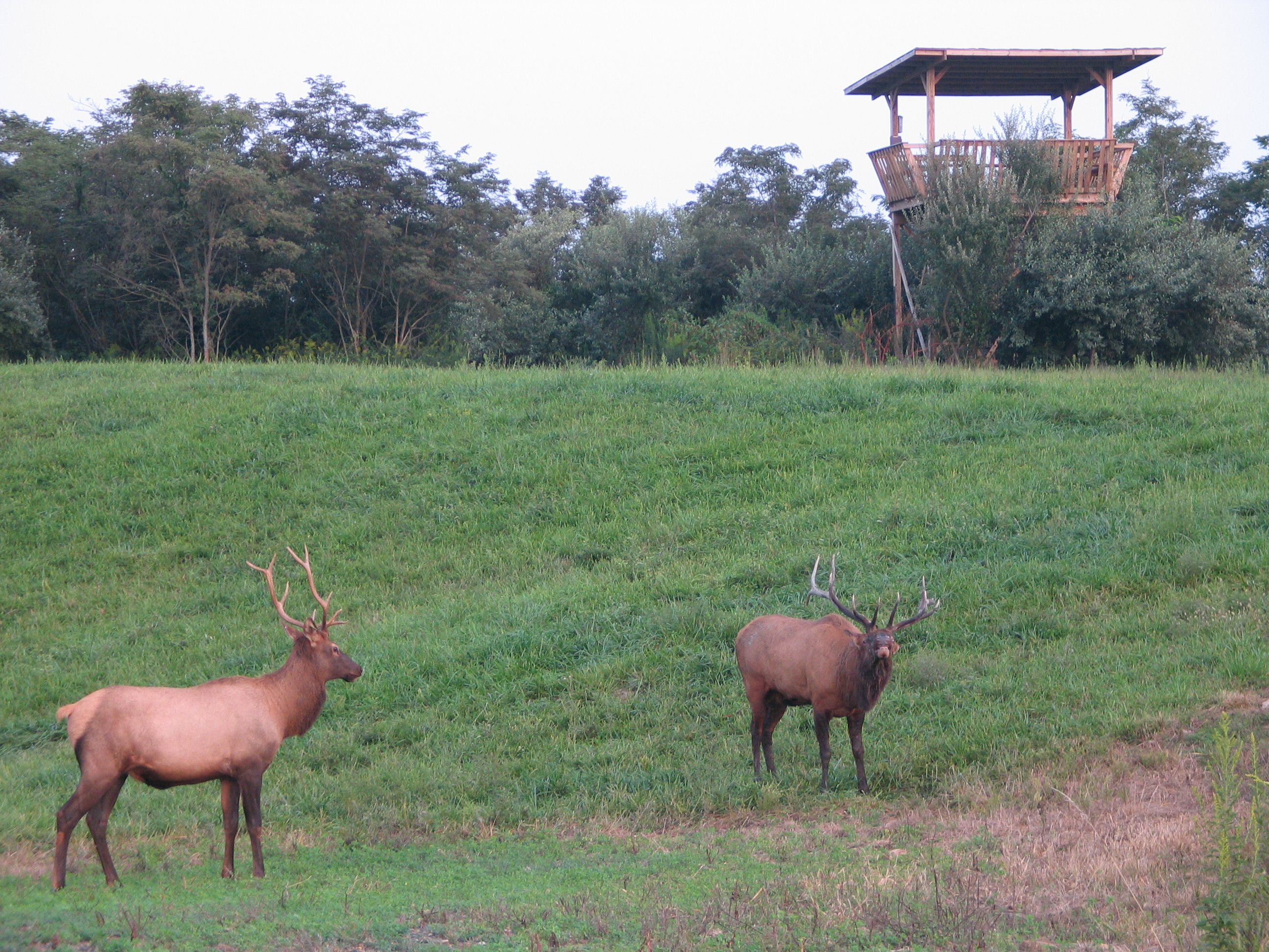 Elk Viewing Tower